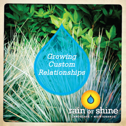 Growing Custom Relationships Rain or Shine Landscape Maintenance Seattle