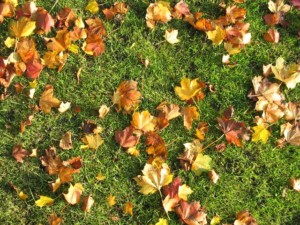 fall lawn clean-up