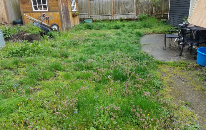 Sand Landscaping - Seattle landscaping services - before
