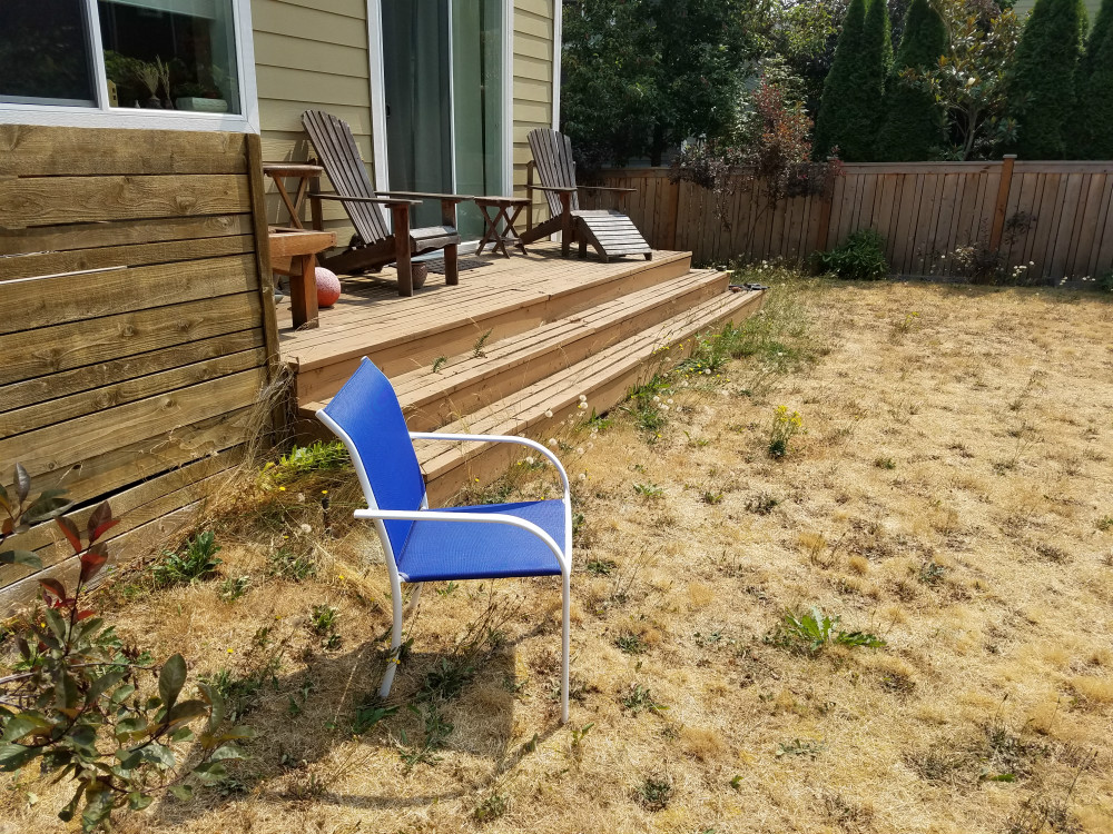 seattle landscaping yard renovation